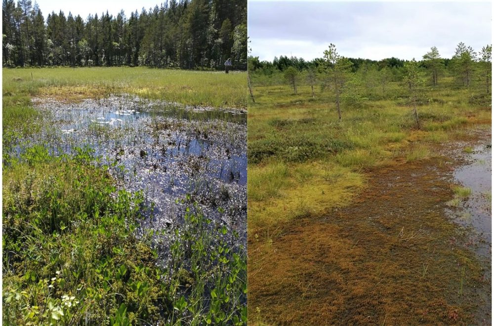 Figure 1. Peatland succession typically proceeds from sedge and herb-covered nutrient-rich fens (left-hand side) to Sphagnum moss and shrub-dominated nutrient-poor bogs (right-hand side).